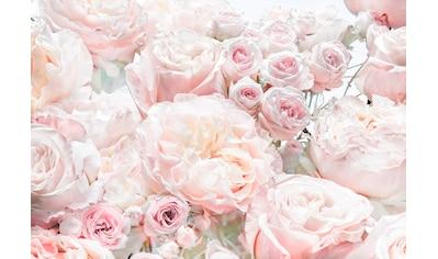 KOMAR Fototapete »Spring Roses«, 8 - teilig kaufen