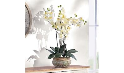 Orchideen Ubertopfe Kaufen Baur