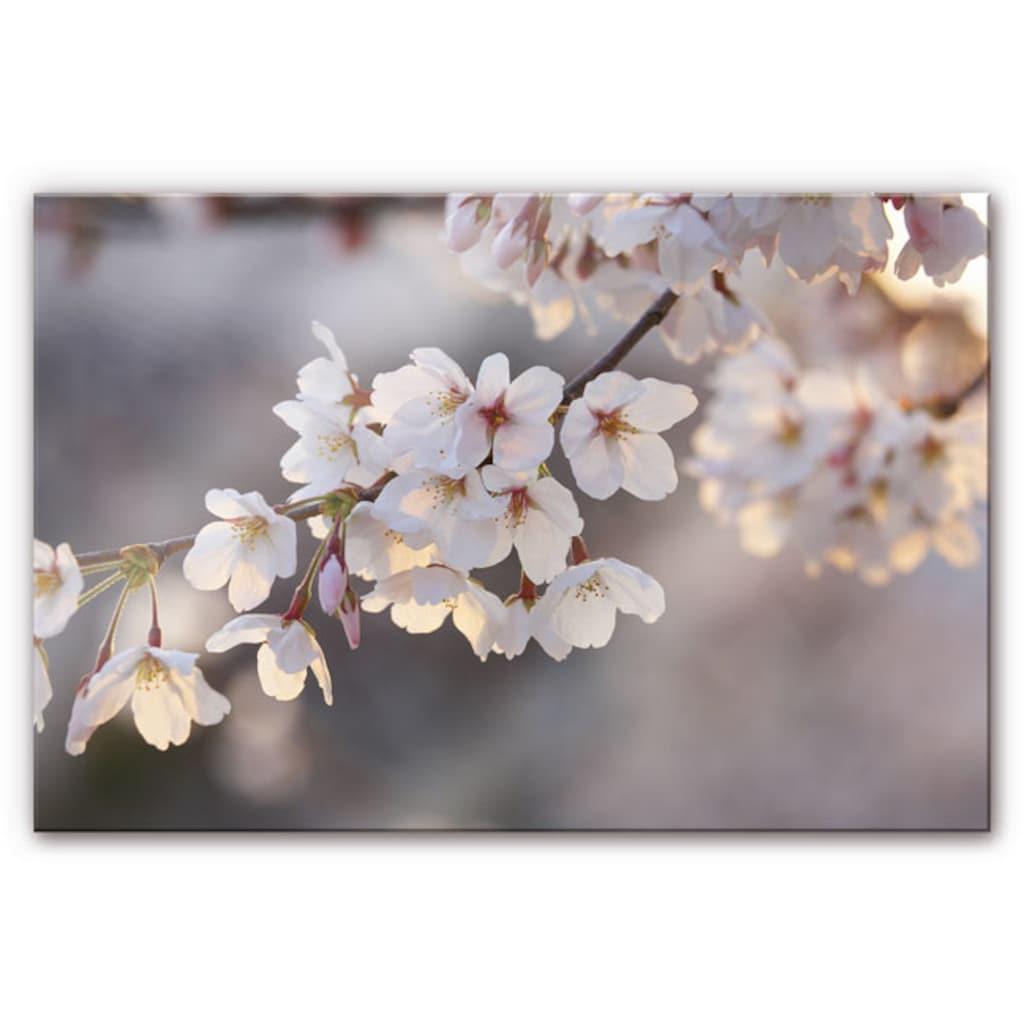 Wall-Art Küchenrückwand »Spritzschutz Kirschblütenzweig«