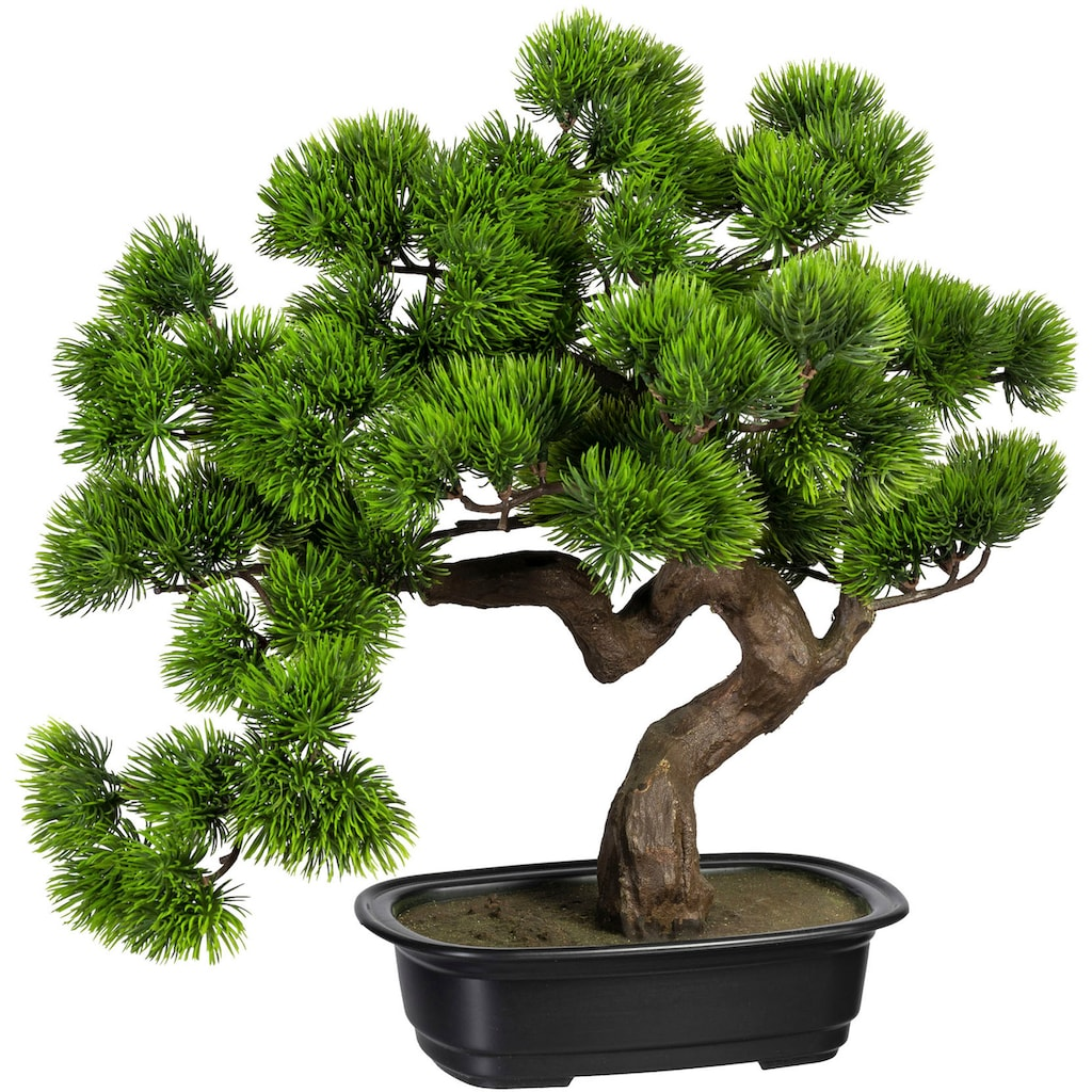 Creativ green Kunstbonsai »Bonsai Kiefer«, in Schale