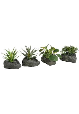 Home affaire Kunstpflanze »Sukkulenten« (4 Stück) kaufen