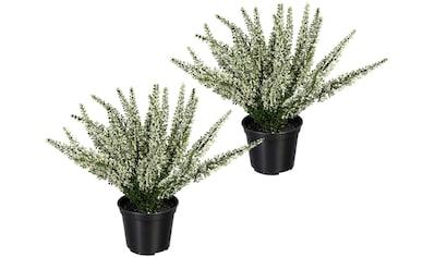 Creativ green Künstliche Zimmerpflanze »Erikabusch«, 2er Set kaufen