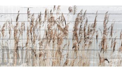 queence Holzbild »Schilf«, 40x80 cm kaufen
