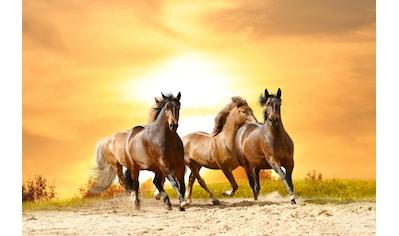 Papermoon Fototapete »Horses Run in Sunset« kaufen