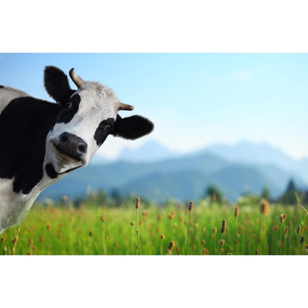 Papermoon Fototapete »Lustige Kuh«, Vliestapete, hochwertiger Digitaldruck