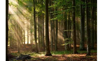 Papermoon Fototapete »Autumn Forest« kaufen