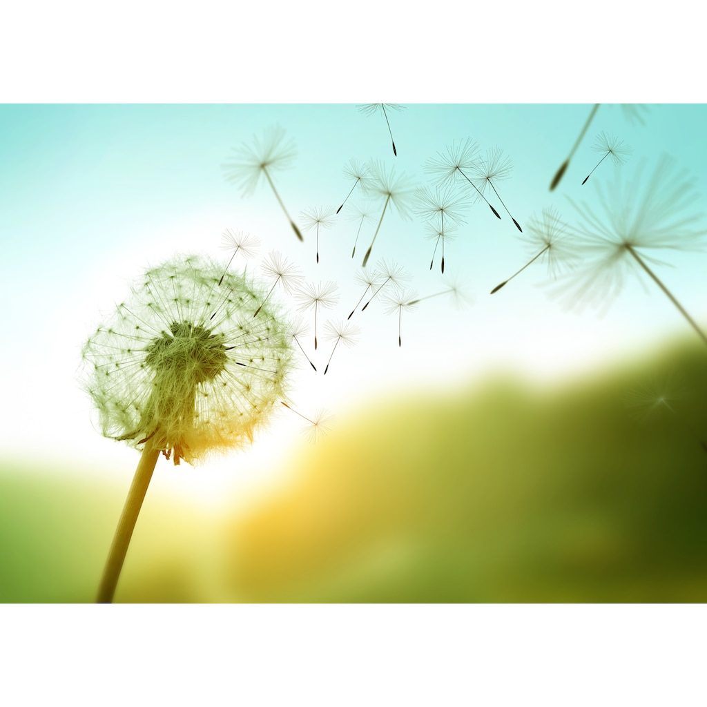Papermoon Fototapete »Dandelion in the Wind«