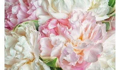 PAPERMOON Fototapete »Blooming Peonies«, Vlies, in verschiedenen Größen kaufen