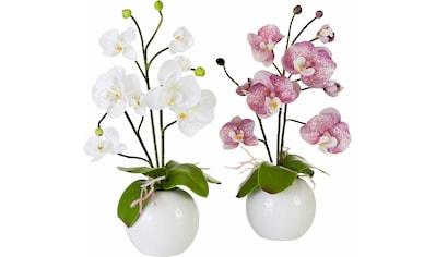 I.GE.A. Kunstpflanze »Orchidee« (Set, 2 Stück) kaufen