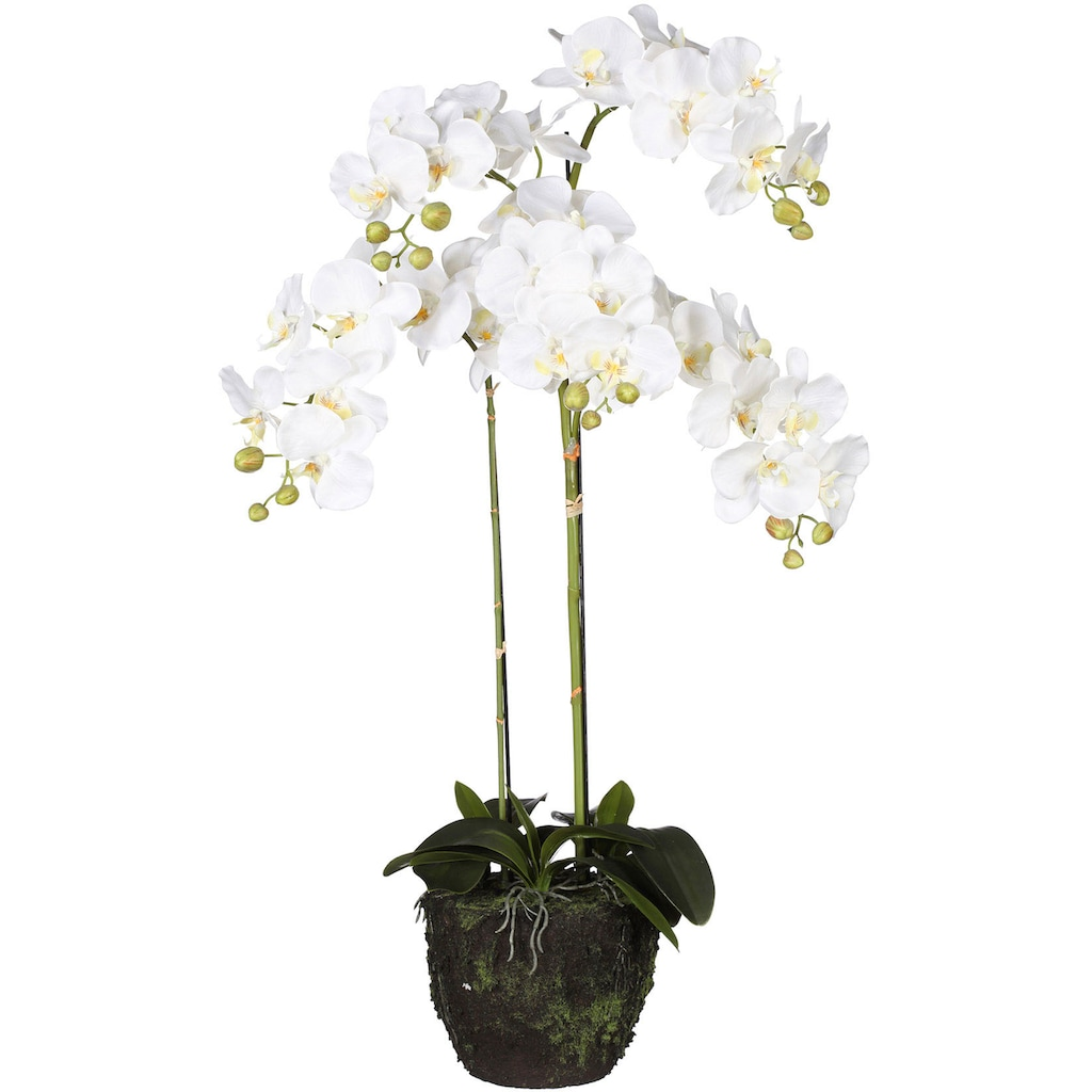Creativ green Kunstorchidee »Phalaenopsis«, im Ballen