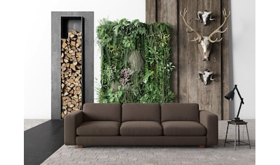 machalke® 4-Sitzer »valentino«, mit breiten Armlehnen, Füße Walnuss, Breite 266 cm kaufen