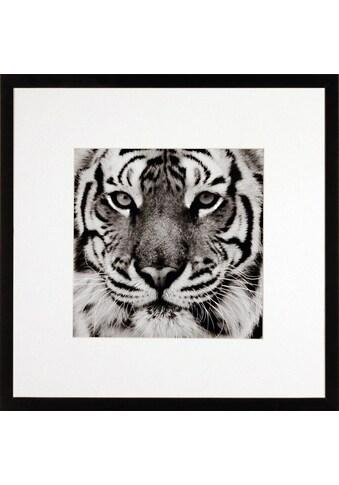 G&C Bild »TIGER« kaufen