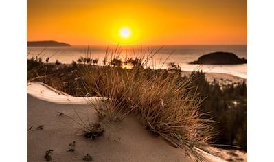 Papermoon Fototapete »Glowing Sun Bush View« kaufen