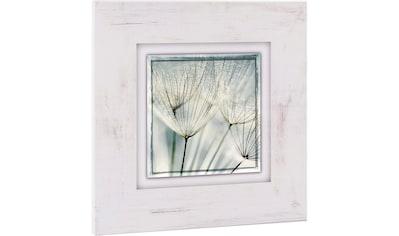 Home affaire Holzbild »Pusteblume nah« kaufen