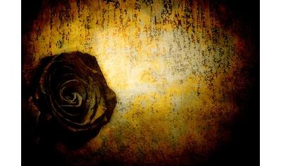 Consalnet Papiertapete »Schwarze Rose«, floral kaufen