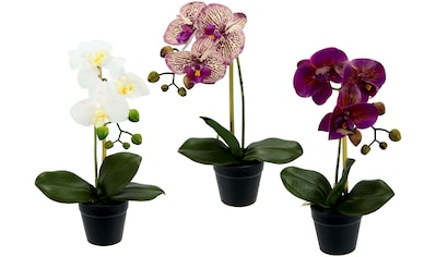 I.GE.A. Kunstorchidee »Phalaenopsis«, im Kunststofftopf, 3er Set kaufen
