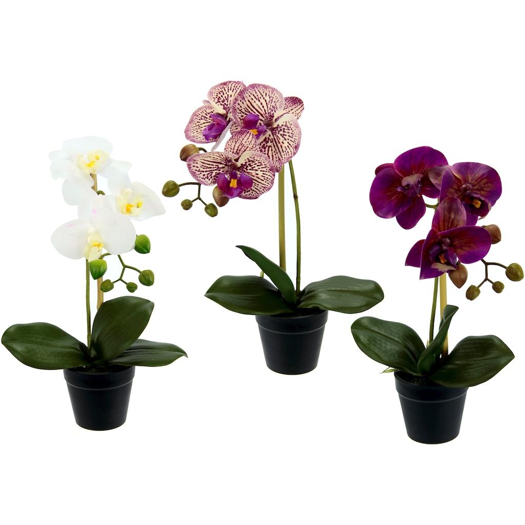 I.GE.A. Kunstorchidee »Phalaenopsis«, im Kunststofftopf, 3er Set