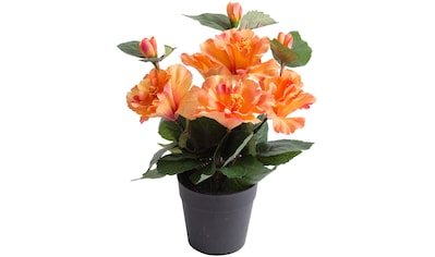 Botanic-Haus Kunstblume »Hibiskus im Topf« kaufen
