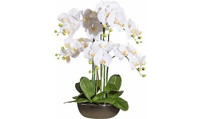 Creativ green Kunstorchidee kaufen