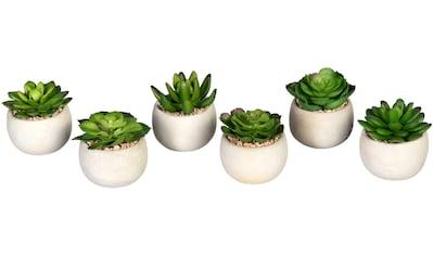 Creativ green Künstliche Zimmerpflanze »Echeverien«, im Zementtopf, 6er Set kaufen