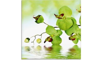 Artland Glasbild »Schöne Orchidee mit grünem Hintergrund«, Blumen, (1 St.) kaufen