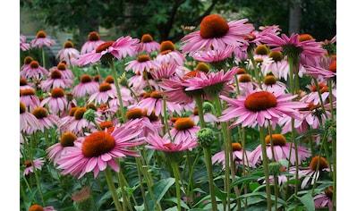 Papermoon Fototapete »Sommerblumen«, Vliestapete, hochwertiger Digitaldruck kaufen