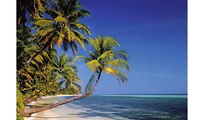 Papermoon Fototapete »Palmenstrand« kaufen