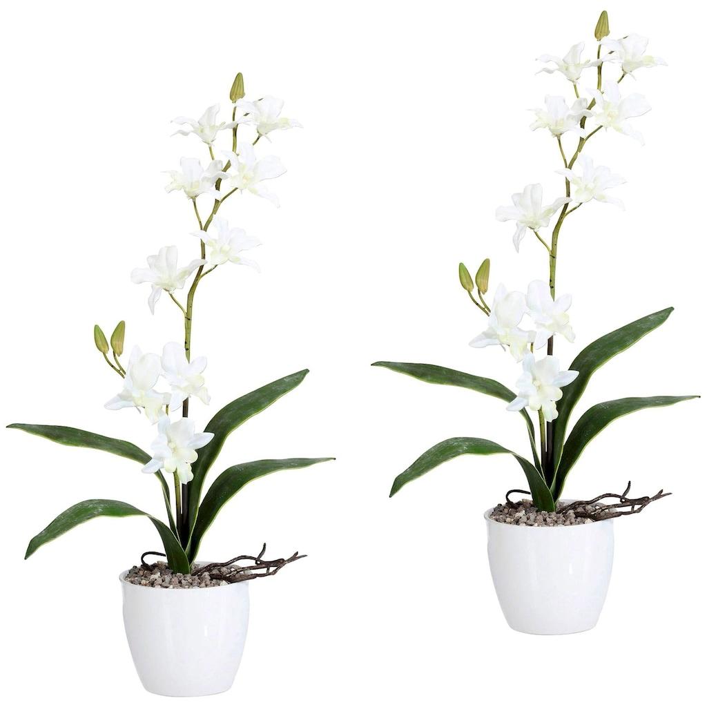 Creativ green Kunstpflanze »Orchidee Dendrobie«, im Keramiktopf