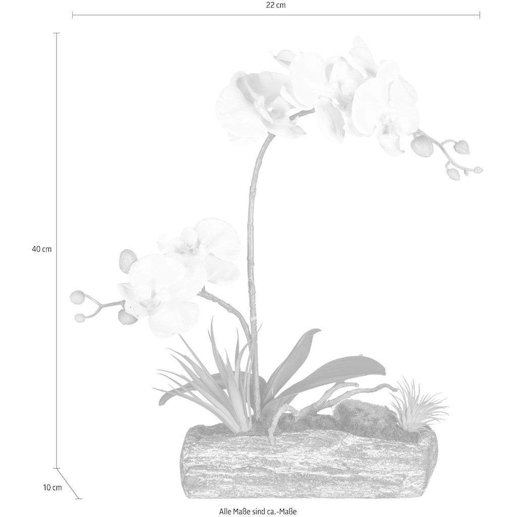 Creativ green Kunstpflanze »Phalaenopsis«