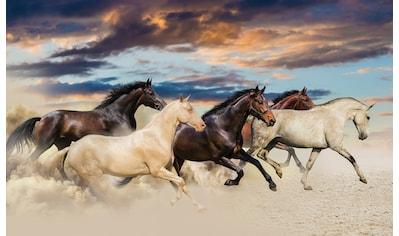 Consalnet Fototapete »Galoppierende Pferde«, Motiv kaufen