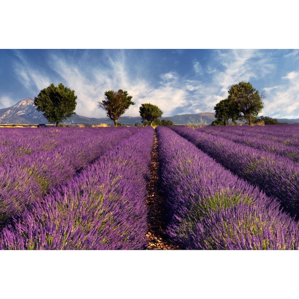 Papermoon Fototapete »Lavendelfeld«, Vliestapete, hochwertiger Digitaldruck