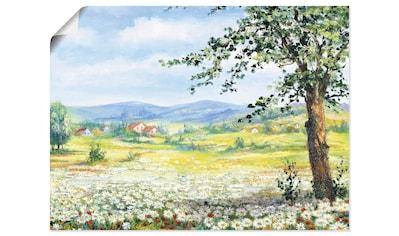 Artland Wandbild »Margeritenfeld«, Wiesen & Bäume, (1 St.), in vielen Größen &... kaufen