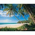 Papermoon Fototapete »Palmbeach«