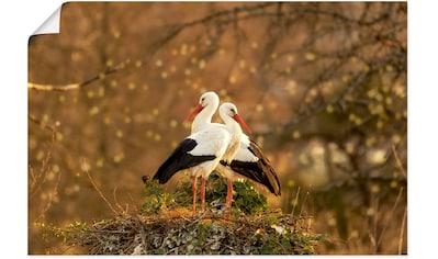 Artland Wandbild »Storchenpaar«, Vogelbilder, (1 St.), in vielen Größen & Produktarten... kaufen
