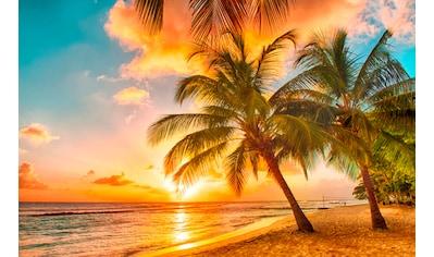Papermoon Fototapete »Barbados Palm Beach«, matt, Vlies, 5 Bahnen, 250 x 180 cm kaufen