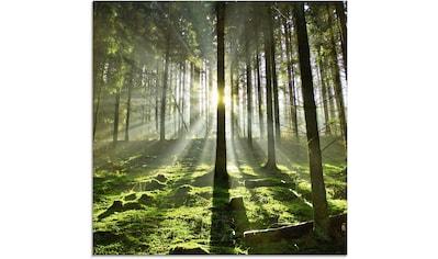 Artland Glasbild »Wald im Gegenlicht«, Wald, (1 St.) kaufen