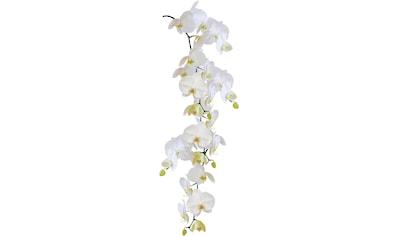 KLEINE WOLKE Wandfolie »Statics Orchid«, 23 x 68 cm kaufen