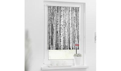 LICHTBLICK Seitenzugrollo »Rollo Klemmfix, ohne Bohren, Verdunkelung, Birken - Schwarz-Weiß«, verdunkelnd, Verdunkelung, freihängend kaufen