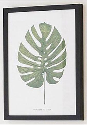 G&C Bild »Blatt Monstera Deliciosa«, 30/40 cm, gerahmt kaufen