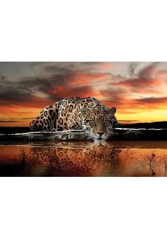 Consalnet Fototapete »Jaguar Sonnenuntergang«, Motiv kaufen