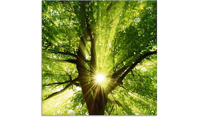 Artland Glasbild »Sonne strahlt explosiv durch den Baum«, Bäume, (1 St.) kaufen