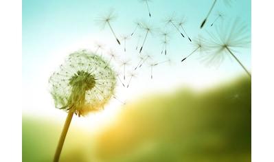 Papermoon Fototapete »Dandelion in the Wind« kaufen