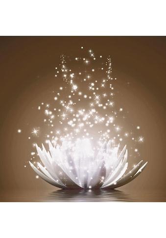 Home affaire Bild »V. Georgiev: Magie der Lotus - Blume« kaufen