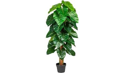 andas Künstliche Zimmerpflanze »Lovisa« kaufen
