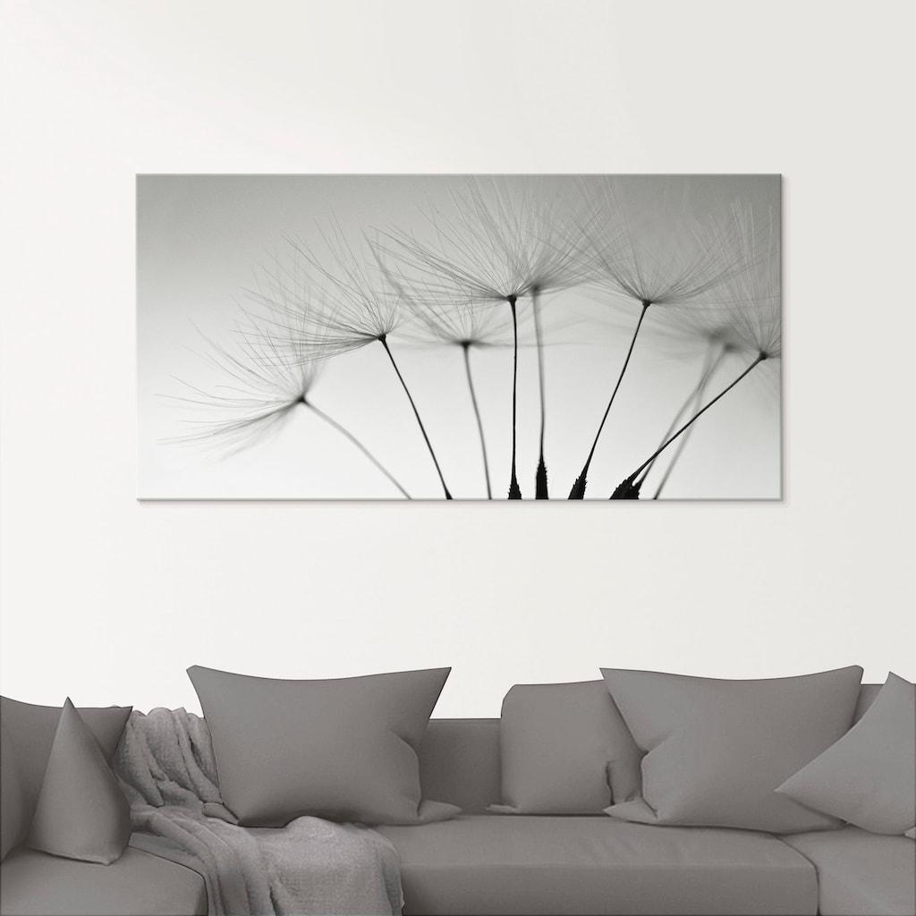 Artland Glasbild »Pusteblumen-Samen«, Blumen, (1 St.)