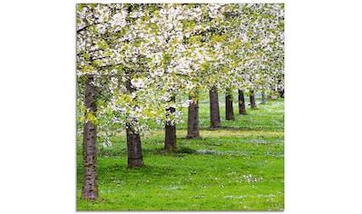 Artland Glasbild »Blütenmeer«, Bäume, (1 St.) kaufen