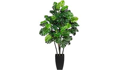 Creativ green Künstliche Zimmerpflanze »Splitphilodendron« kaufen