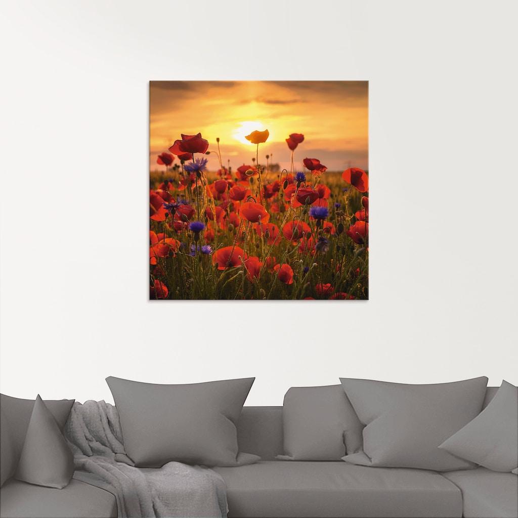 Artland Glasbild »Mohnblumen im Abendlicht«, Blumen, (1 St.)