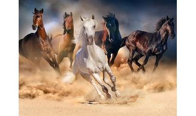 Papermoon Fototapete »Horse Herd in Gallop« kaufen