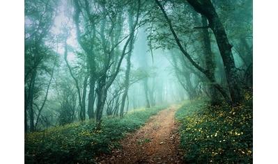 Papermoon Fototapete »Misty Forest in Fog« kaufen